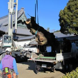 岡崎市の寺院様 木の撤去を行いました